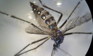 Dengue: no se han detectado larvas del mosquito transmisor