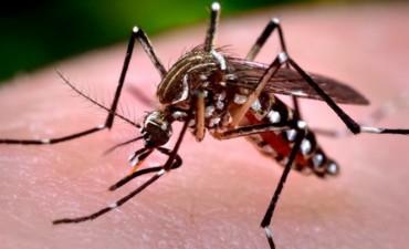 El Municipio refuerza las medidas de prevención contra el dengue