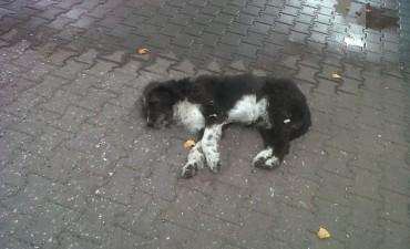 Animales Abandonados: en Olavarría habría entre 30 y 40 mil perros