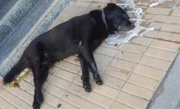 Envenenaron perros en el barrio Independencia