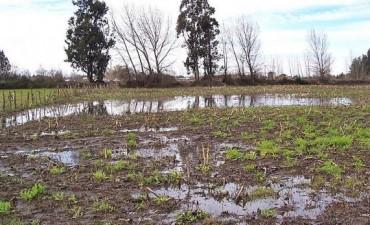 Registros de lluvia de Olavarría y la región de este lunes