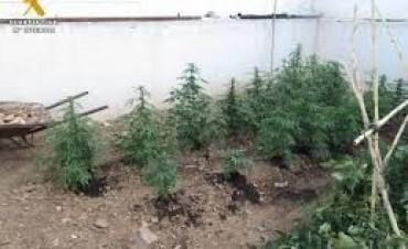 Secuestraron autopartes de motos y plantas de marihuana en un operativo policial