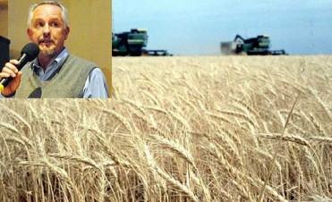 La problemática del trigo