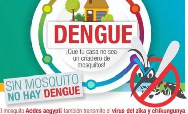Dengue: Se encontraron larvas en una gomería de Villa Laclau
