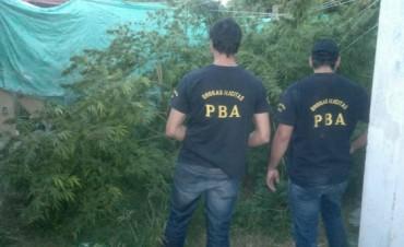 Operativo antidroga: Secuestran 30 kg de marihuana