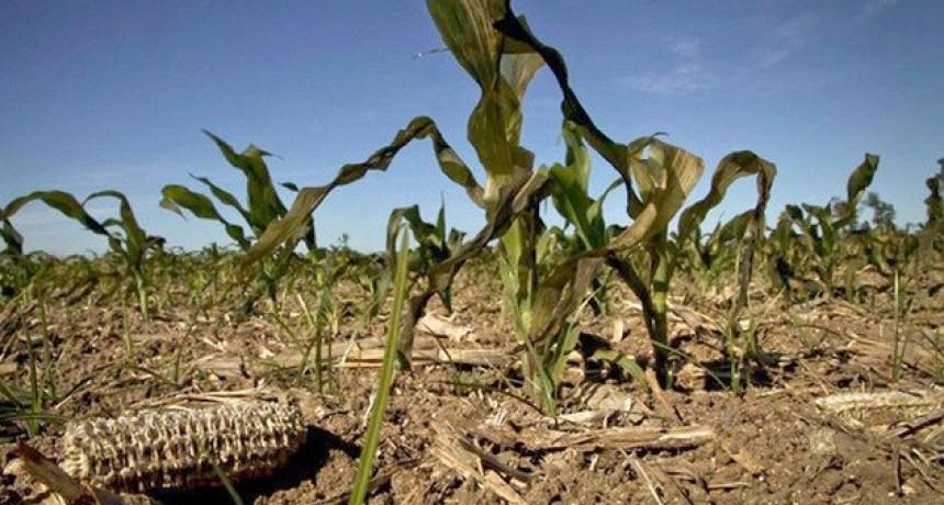 'La emergencia agropecuaria no soluciona la pérdida de forraje'