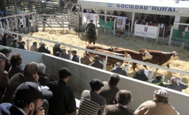 Resultado de la venta de reproductores en La Nación Ganadera