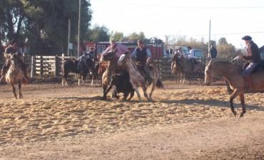 Resultados en caballos Criollos en La Nación Ganadera