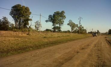 Se registró un corte de energía por la caída de un árbol talado
