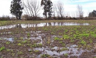El campo está pasado por agua