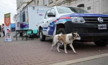 El quirófano veterinario móvil comenzó a itinerar