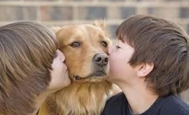 Este sábado habrá una jornada solidaria de adopción de mascotas