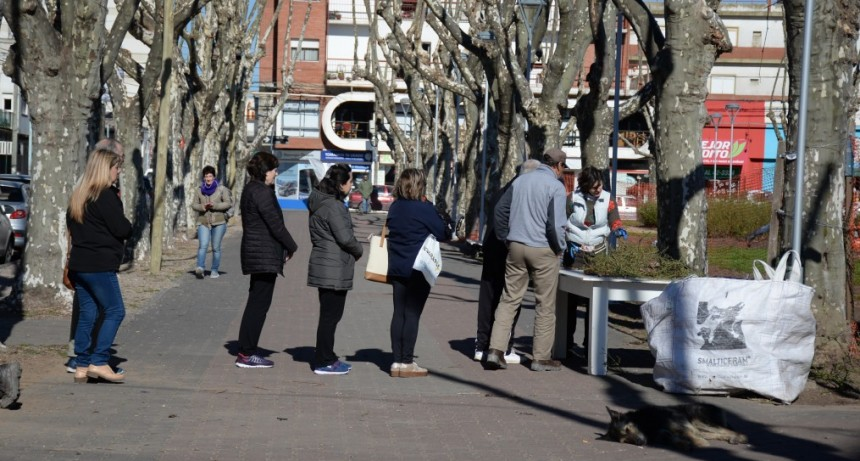 Poda en la Plaza Central: se repartieron rosas para los vecinos