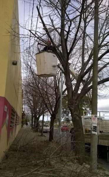 Realizan mantenimiento a los árboles de la Ex Escuela Piloto