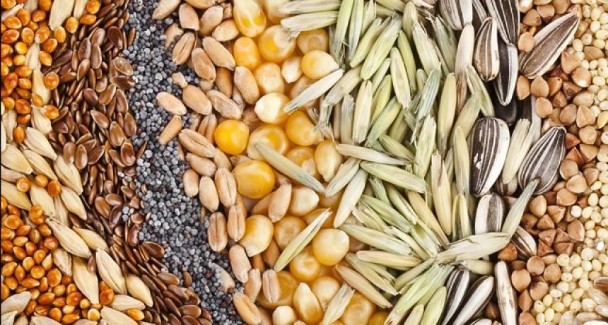 Jornada de intercambio de semillas: promoción de alimentación saludable y soberana