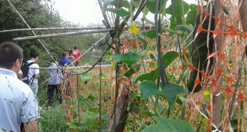 Desarrollo Sustentable: taller de Huerta Agroecológica