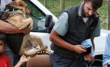 Vacunación antirrábica canina y felina