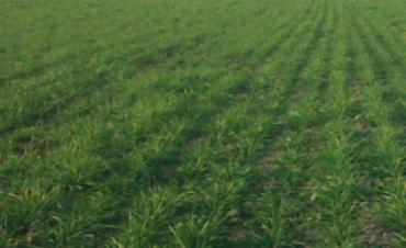 La importancia del manejo de las pasturas
