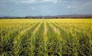 En Regional Agropecuario,habló el ing.Ivan Lupori