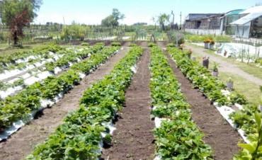 Crece la huerta en la Unidad N° 27 de Sierra Chica