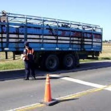 Modificación en el transporte de animales vivos