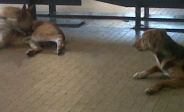 Jornada de adopción de perros callejeros