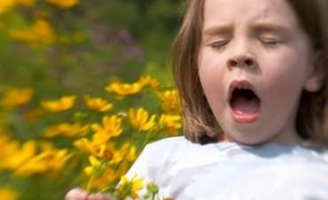 Rinitis y problemas alérgicos