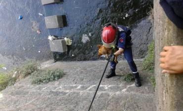 Los bomberos rescataron un perro