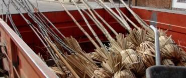 Plan Regulador de Arbolado Público: comenzaron las plantaciones en Villa Floresta