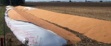 Preocupación para la Argentina: Francia busca tope a la soja en el G20
