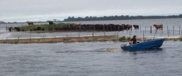 Bolívar: un 85% de los campos están afectados por el agua