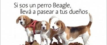 Anuncian en el primer encuentro de perros Beagle de Olavarría