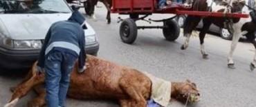En Luján, entidades protectoras de animales protestaron por el maltrato hacia los caballos