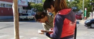 Comienza la segunda etapa del Censo de Arbolado Urbano