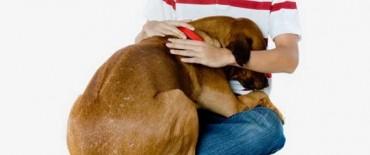 Ante   la fiesta por el año nuevo, se solicita extremar los recaudos con las mascotas a raíz del impacto por la pirotecnia